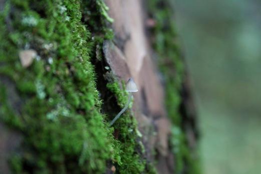 litauischer Wald 3